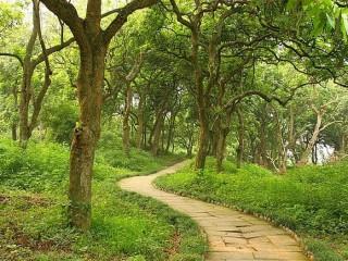 泸州张坝桂圆林风景区